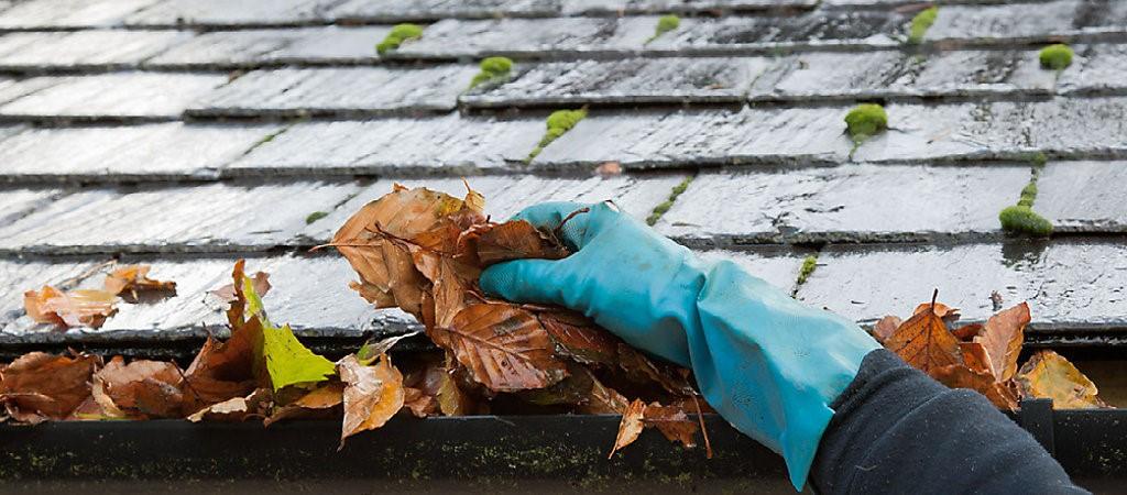 11 consejos para proteger su hogar de las termitas durante el otoño